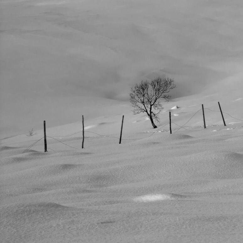 Finnvikdalen, Birch & Fence